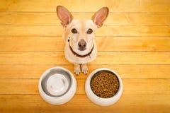 Πεινασμένο κύπελλο σκυλιών Στοκ Εικόνες