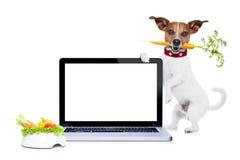 Πεινασμένο σκυλί με το υγιές vegan κύπελλο Στοκ Φωτογραφία