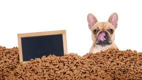 Πεινασμένο σκυλί σε μια βροχή τροφίμων Στοκ Εικόνα