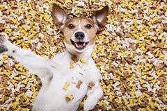 Πεινασμένο σκυλί στο μεγάλο ανάχωμα τροφίμων Στοκ Φωτογραφίες