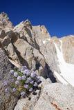 Πειραματικά λουλούδια ουρανού από την πλευρά βουνών Στοκ Φωτογραφίες