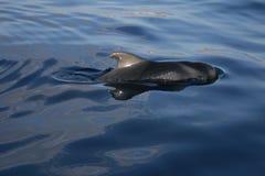 πειραματική φάλαινα Στοκ εικόνα με δικαίωμα ελεύθερης χρήσης