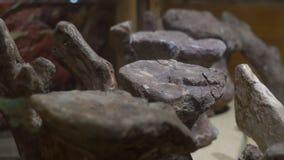 ΠΕΚΙΝΟ, ΚΙΝΑ - 22 ΟΚΤΩΒΡΊΟΥ 2018: πετρώνω? σπόνδυλοι φαλαινών στο μουσείο της φυσικής ιστορίας απόθεμα βίντεο