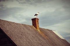 Πελαργός στη στέγη στο νεφελώδες υπόβαθρο ουρανού Στοκ Εικόνες