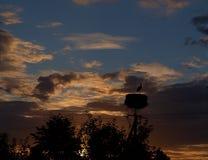 Πελαργός το βράδυ Στοκ φωτογραφία με δικαίωμα ελεύθερης χρήσης
