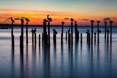 Πελεκάνος και αποβάθρα που συσσωρεύουν τις σκιαγραφίες ηλιοβασιλέματος Στοκ φωτογραφία με δικαίωμα ελεύθερης χρήσης