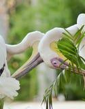 Πελεκάνος - Μεγάλο πουλί νερού Στοκ φωτογραφίες με δικαίωμα ελεύθερης χρήσης