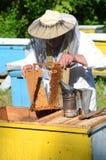 Πεπειραμένο ανώτερο apiarist που αποκόπτει το κομμάτι της κηρήθρας προνυμφών στο μελισσουργείο Στοκ εικόνες με δικαίωμα ελεύθερης χρήσης