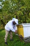 Πεπειραμένο apiarist που κάνει τον υποκαπνισμό ενάντια στις ασθένειες των μελισσών στο μελισσουργείο Στοκ Εικόνες