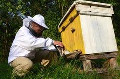 Πεπειραμένο apiarist που κάνει τον υποκαπνισμό υποκαπνισμού ενάντια στις ασθένειες των μελισσών στο μελισσουργείο Στοκ Φωτογραφίες