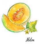 Πεπόνι Watercolor διανυσματική απεικόνιση