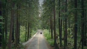 Περάσματα αυτοκινήτων μέσω της δασικής κεραίας φιλμ μικρού μήκους