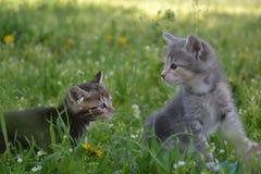 Περίεργα γατάκια λίγων μωρών Στοκ φωτογραφία με δικαίωμα ελεύθερης χρήσης