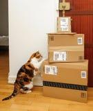Περίεργη γάτα που επιθεωρεί τα πολλαπλάσια πρωταρχικά κιβώτια του Αμαζονίου Στοκ Φωτογραφίες