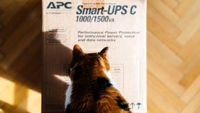 Περίεργη γάτα που επιθεωρεί APC έξυπνος-UPS την μπαταρία Στοκ εικόνα με δικαίωμα ελεύθερης χρήσης