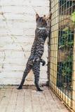 Περίεργη γάτα που ψάχνει μια έξοδο Στοκ εικόνες με δικαίωμα ελεύθερης χρήσης