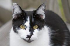 Περίεργη γάτα Στοκ φωτογραφία με δικαίωμα ελεύθερης χρήσης