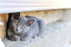 Περίεργη γάτα Στοκ Φωτογραφίες