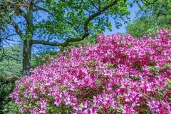 Περίεργος αγγλικός κήπος εξοχικών σπιτιών την άνοιξη με ποικίλες εγκαταστάσεις Στοκ Εικόνα