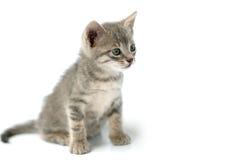 περίεργος λίγη γάτα Στοκ Εικόνες