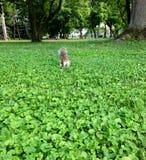 περίεργος σκίουρος στοκ φωτογραφία