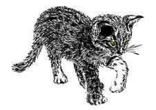 περίεργο γατάκι Στοκ εικόνες με δικαίωμα ελεύθερης χρήσης