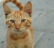 περίεργο γατάκι στοκ φωτογραφία