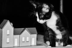 περίεργο γατάκι Στοκ εικόνα με δικαίωμα ελεύθερης χρήσης