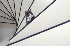 περίεργο γατάκι Στοκ φωτογραφίες με δικαίωμα ελεύθερης χρήσης