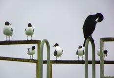 Περίεργο γυρισμένο πουλί Στοκ φωτογραφίες με δικαίωμα ελεύθερης χρήσης