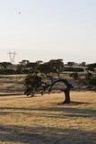 περίεργο δρύινο δέντρο ακ& Στοκ εικόνες με δικαίωμα ελεύθερης χρήσης