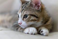 Περίεργο νέο γατάκι Στοκ φωτογραφία με δικαίωμα ελεύθερης χρήσης
