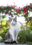 Περίεργο πορτρέτο γατών Στοκ Φωτογραφία