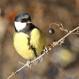 Περίεργο πουλί Στοκ εικόνα με δικαίωμα ελεύθερης χρήσης