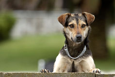 περίεργο σκυλί Στοκ φωτογραφία με δικαίωμα ελεύθερης χρήσης