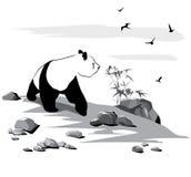 περίεργο panda Στοκ φωτογραφίες με δικαίωμα ελεύθερης χρήσης