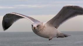 περίεργο seagull Στοκ φωτογραφίες με δικαίωμα ελεύθερης χρήσης