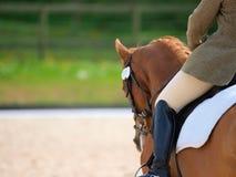 Περίληψη εκπαίδευσης αλόγου σε περιστροφές Στοκ φωτογραφία με δικαίωμα ελεύθερης χρήσης