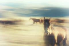 Περίληψη των αλόγων Στοκ φωτογραφία με δικαίωμα ελεύθερης χρήσης