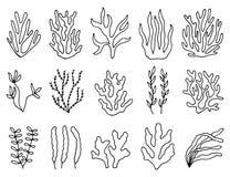 Περίληψη φυκιών στην απομόνωση γραμμικό σύνολο σχεδίων αντικειμένων Στοκ Εικόνες