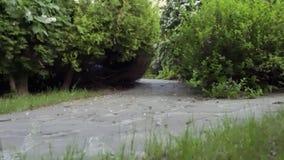 Περίπατοι ατόμων στον κήπο απόθεμα βίντεο