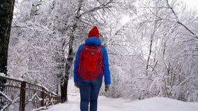 Περίπατοι γυναικών κατά μήκος μιας πορείας μεταξύ του όμορφου χειμερινού χιονισμένου τοπίου Σαφής ηλιόλουστος παγωμένος καιρός φιλμ μικρού μήκους