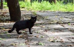 Περίπατοι μαύροι γατών μέσω του πάρκου το φθινόπωρο Στοκ Φωτογραφία