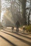 Περίπατος άνοιξη στο δάσος με δύο Άγιος Bernard Στοκ Φωτογραφίες