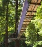 Περίπατος ` 02 δέντρων Redwoods ` Στοκ Εικόνες