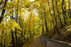 Περίπατος μέσω του δάσους φθινοπώρου στοκ φωτογραφία με δικαίωμα ελεύθερης χρήσης