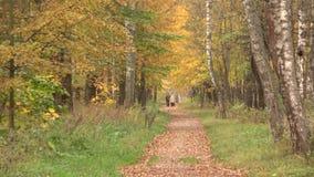 Περίπατος μέσω του πάρκου φθινοπώρου απόθεμα βίντεο