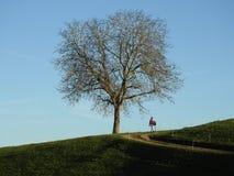 Περίπατος μόνο κάτω από ένα δέντρο ξύλων καρυδιάς στοκ φωτογραφία