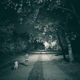 Περίπατος νύχτας με το σκυλί Στοκ εικόνα με δικαίωμα ελεύθερης χρήσης