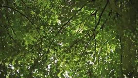 περίπατος πάρκων απόθεμα βίντεο